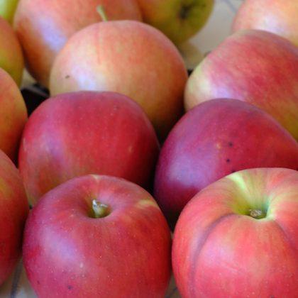 飛騨りんご 旬 スーパーフルーツ 健康果物 ダイエットの味方