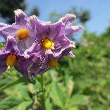 畑 自然 野菜 オーガニック リラックス 飛騨高山